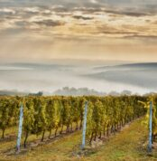 panorama-vinice