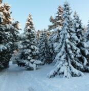 winter-südmähren